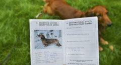 Какие документы нужны на собаку?