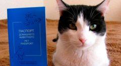 Документы на кошку – необходимый перечень на все случаи жизни