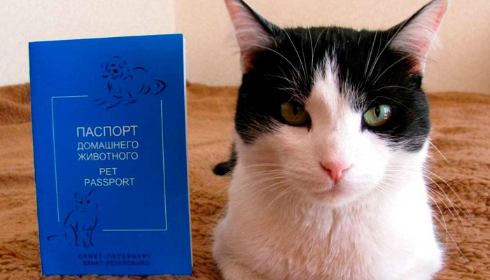 Документы кошке