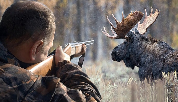 Добыча охотника