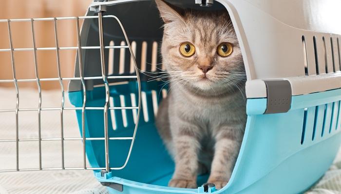Вывоз котенка