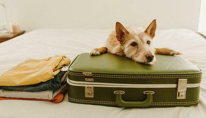 Документы для перевоза собаки